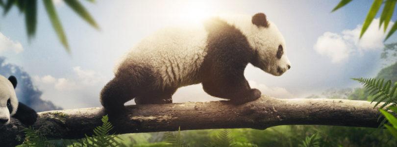 Earth – Un giorno straordinario: Il documentario sarà disponibile anche in Home Video